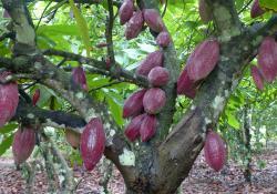 Transport à la Voile en partenariat avec le chocolatier bio Saveurs & Nature